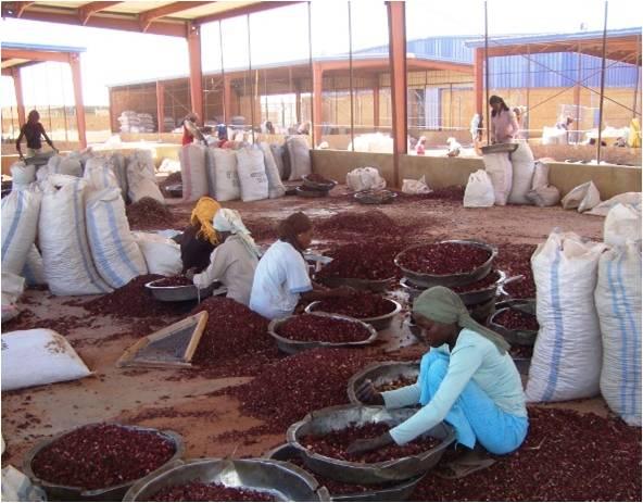 UNDP Sudan (3)